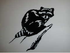 Raccoon on a limb